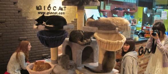 cat-cafe-4-590x260