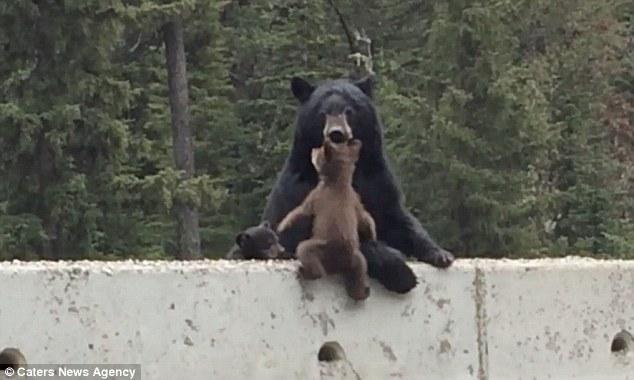 bearrrrrrrrrrrr