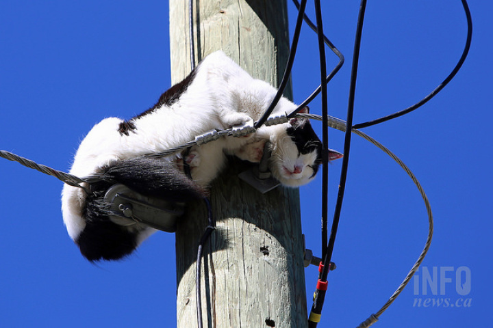 cat-on-pole-2