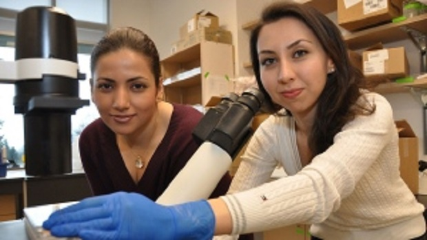 sfu-creates-beating-heart-cells