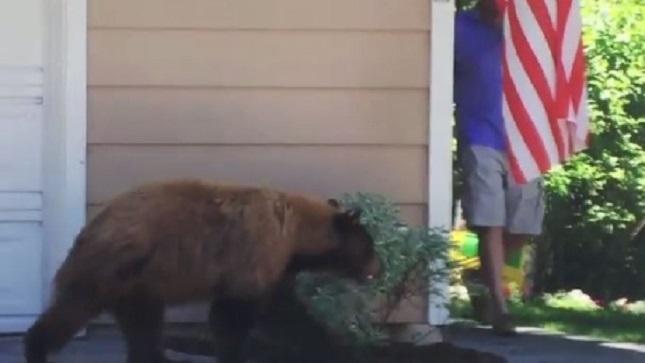 Bear, man freak each other out