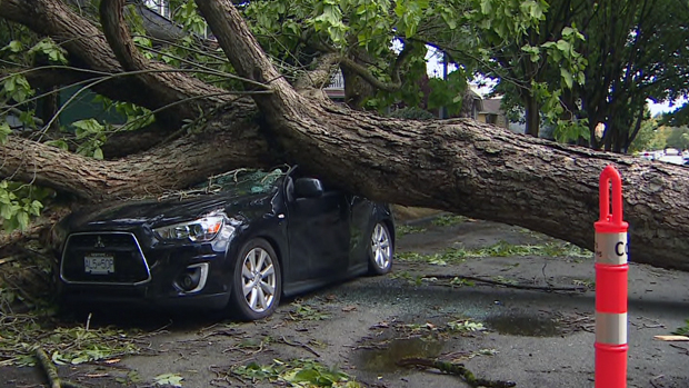 Man escapes car after tree falls on it while he's driving