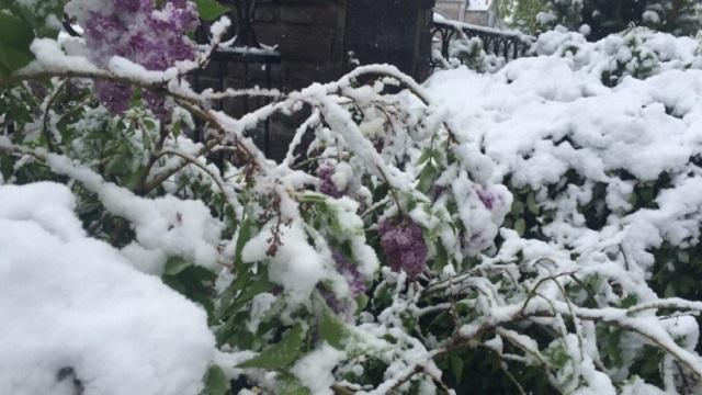 calgary-snow