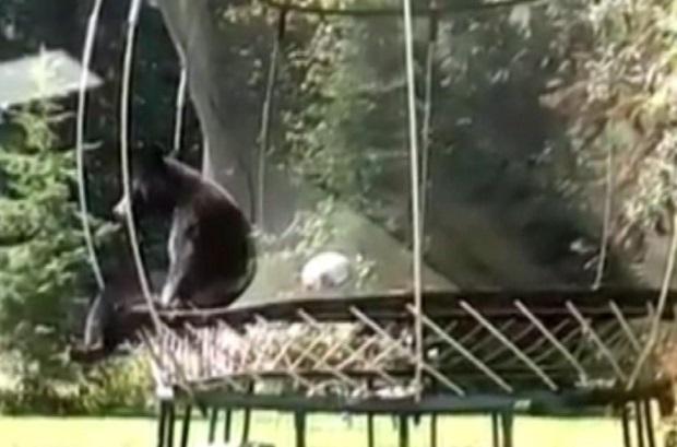 bear-on-trampoline