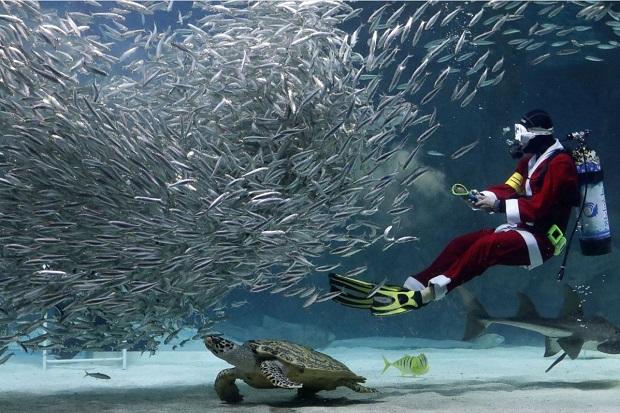غواصی با لباس بابانوئل در حال شنا در کنار ماهی ها در آکواریوم مشهور شهر سئول