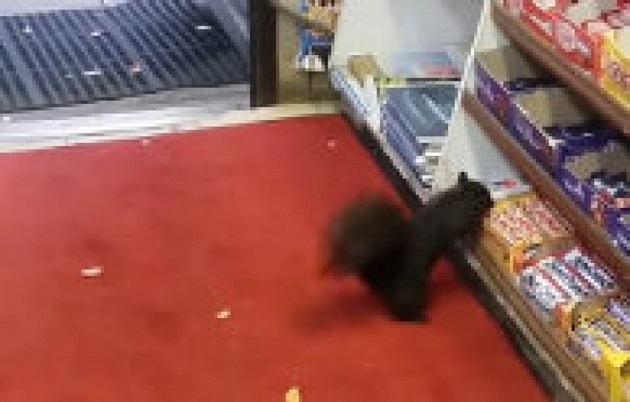 squirrels-stealing-chocolate-bars-from-east-end-toronto-store