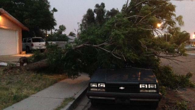 Tree Falls on Car During Windstorm