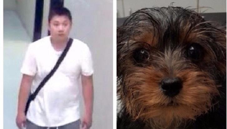 puppy-suspect
