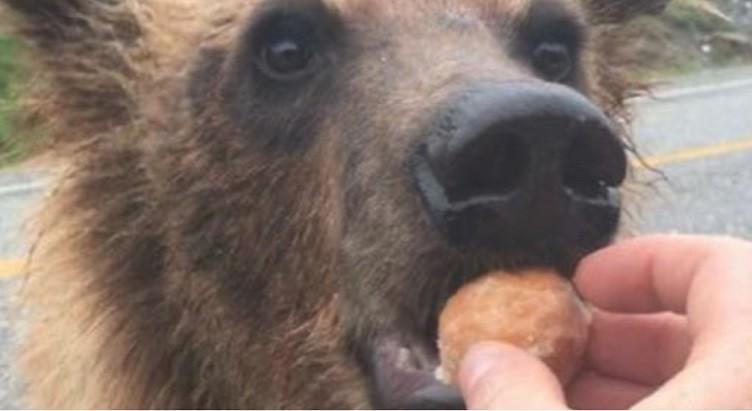 خرس 1