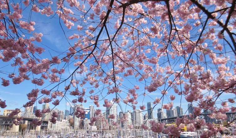 Spring-in-Vancouver