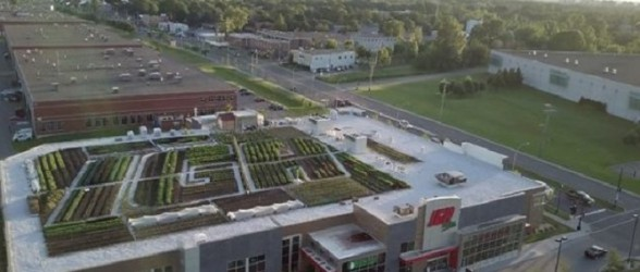 سوپرمارکتی در مونتریال،سبزیجات کاشته شده در پشت بام فروشگاه را عرضه می کند(فیلم)
