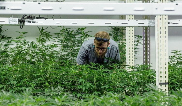 CannabisPlantation-Smudde-9