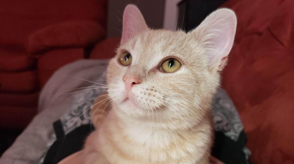 مسافری که ایرکانادا گربهاش را گم کرد، قصد شکایت به دادگاه را دارد!