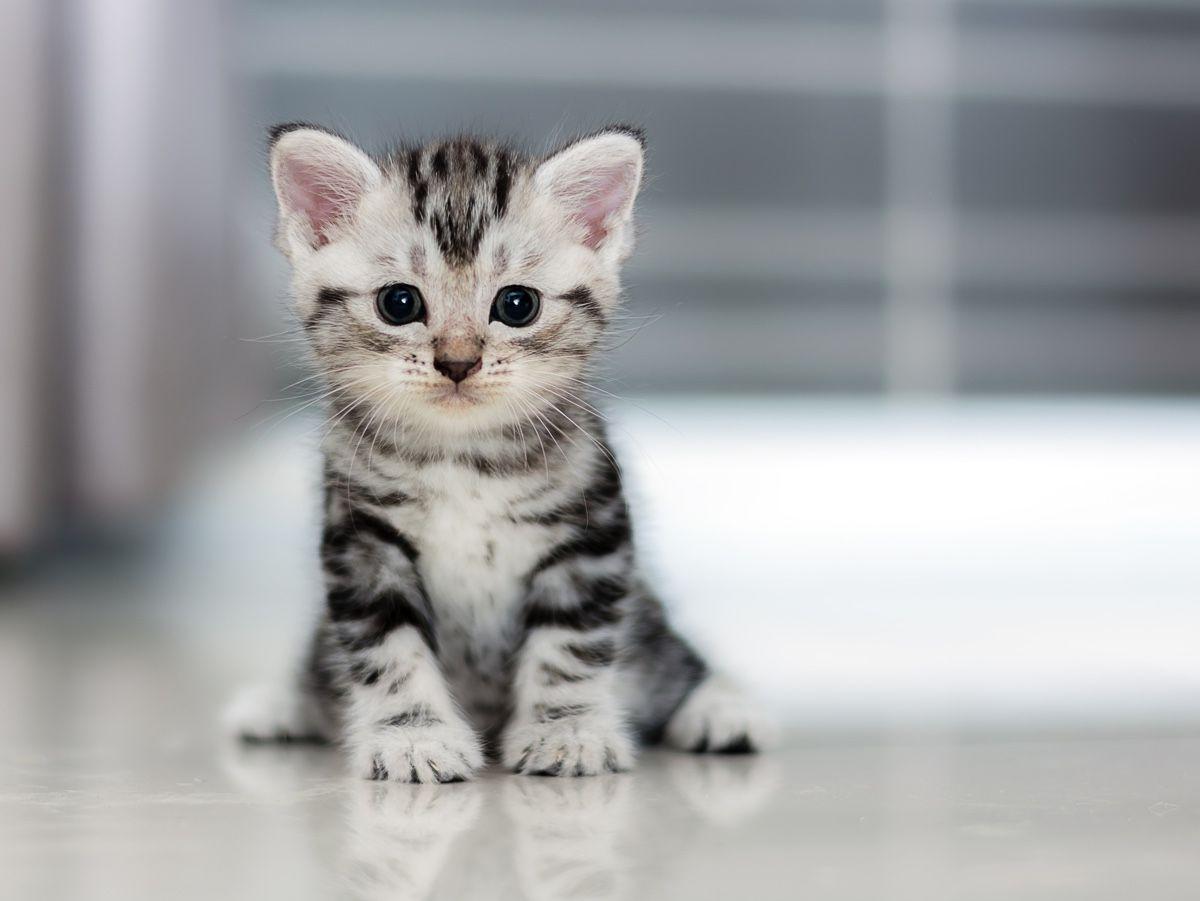 400 نفر در لیست انتظار سرپرستی بچه گربه های ونکوور بزرگ !!