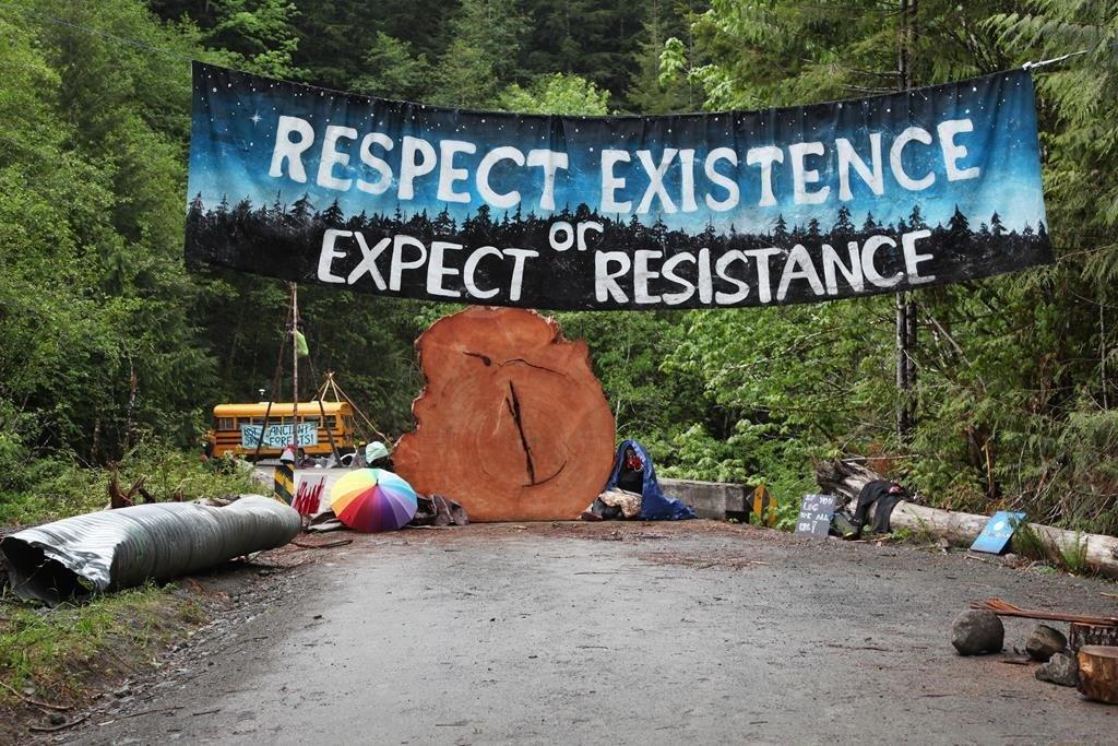 کمپین اعتراضی به قطع درختان قدیمی در ونکوور آیلند یک ساله شد